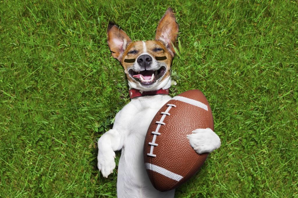 american football dog